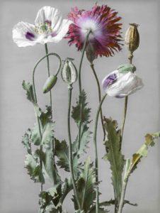 Arte e botanica in mostra a Ligornetto